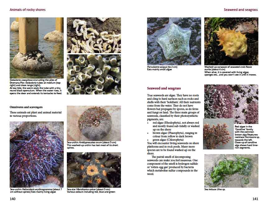 Intertidal animals, seaweeds